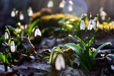 Весна. Фото: Олег Константинов