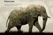Cодействие сохранению биологического разнообразия животного мира