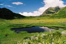 Фото предоставлено Кавказским государственным природным биосферным заповедником