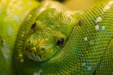 День змеи