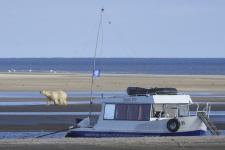 На острове Шокальского. Карское море. Ямало-Ненецкий автономный округ.