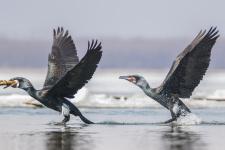 Синхронный бег по воде. Фото: Шаклеин Евгений