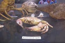 Морские ископаемые