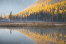 Раннее утро в долине реки Шавла. Фото: Ольга Потапова