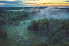 Река тумана. Фото: Дмитрий Иванов