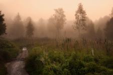 Лесной пейзаж. Фото: Алексей Сергованцев / Фотоконкурс «Самая красивая страна»