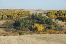Аксаковская лесостепь. Оренбургская область