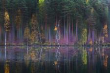 Музыка леса. Фото: Ирина Заколдаева