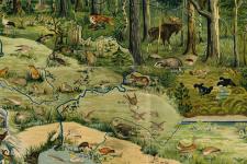 Фрагмент Зоогеографической карты СССР. 1928 год