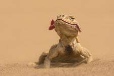 Песчаная красавица. Фото: Антон Воронин
