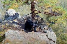"Кадр из видео с фотоловушки нацпарка ""Земля леопарда"""