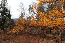 Золотая осень на Крыктытау