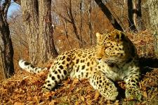 "Фото предоставлено ФГБУ ""Земля леопарда"""