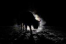 Лесной призрак. Фото: Александра Сазонова