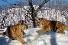 """Фото со страницы национального парка """"Земля леопарда"""" в Вконтакте (vk.com/leopard_land)"""