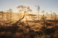 Живопись северных болот. Фото: Арсений Кашкаров