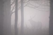 Призрак старого леса. Фото: Сергей Белых