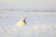 Белый крокодил. Фото: Василий Баранюк