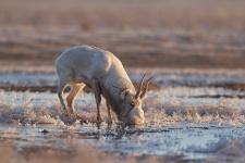 Утренняя жажда. Фото: Олег Першин