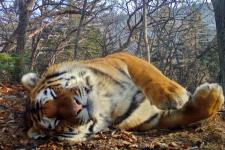"""Фото предоставлено отделом науки национального парка """"Земля леопарда"""""""