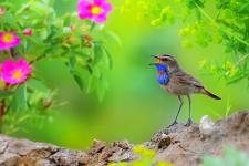 Летние луговые песни.Фото: Владилен Зубарев