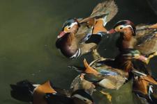 Фото: Кавказский государственный природный биосферный заповедник
