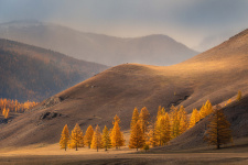 Золото Восточного Саяна. Фото: Елена Лебедева