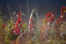 В чукотском лесу. Фото: Татьяна Придорожная