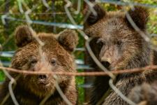 Медвежата Мишка и Машка. Фото: Роман Воробьёв