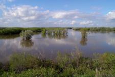 Высокое половодье на реке Урал. Фото А.Чибилёва