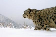 Фото с видеорегистратора в Саяно-Шушенском заповеднике