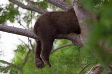 Спящие лапки. Фото: Денис Будьков