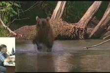 16.05.18. А. Нечаев. Камчатский медведь