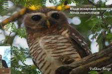 14.10.19. С. Волков. Мадагаскар: впечатления натуралиста