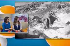 Участники антарктических экспедиций выступили в передаче «Хорошее утро» телеканала «Кубань 24»