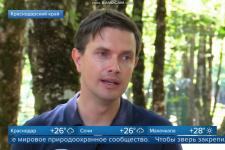 Репортаж 1 канала: В Сочи сотрудники Центра восстановления леопардов выпустили на волю двух хищников