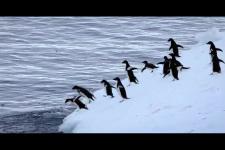23.04.21. Ф. Кусто. Почему нужно защищать Антарктиду?