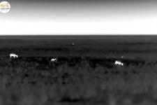 Темнота — друг тушканчиков: как живёт степь в ночное время