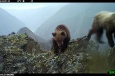 Косолапое детство: из жизни медвежат Саяно-Шушенского заповедника