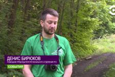 Экологический рейд по арбековсому лесу