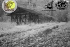 Выводок дальневосточного лесного кота впервые попал в объектив видеокамеры