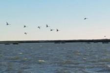 Заповедная Россия: Астраханский Заповедник
