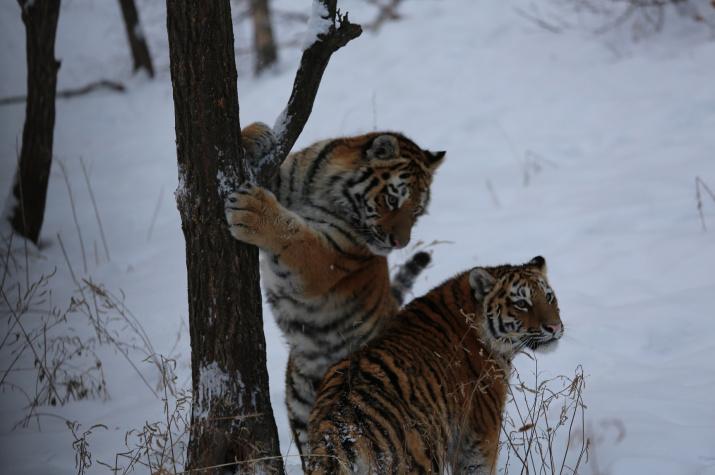 Фото: Дмитрий Мезенцев