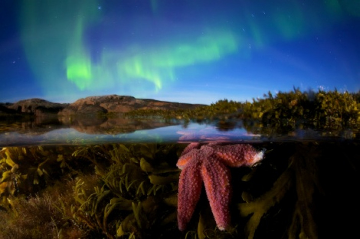 """""""Star of the North"""". Photo by: Yegor Nikiforov"""