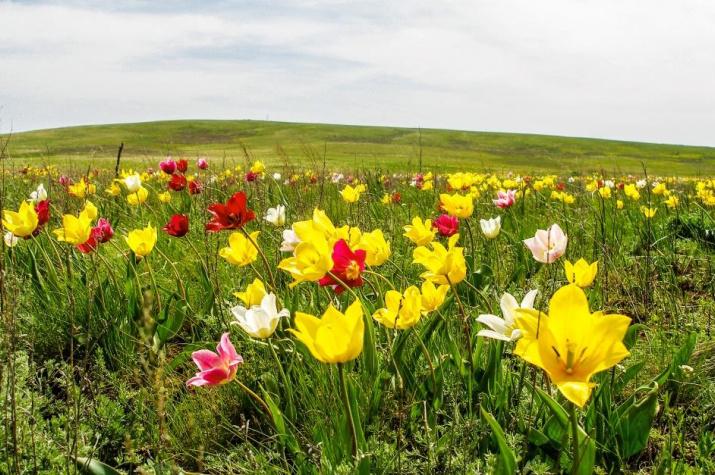 Донгузская степь – крупнейший участок нераспаханных ковыльных степей в Европейской России