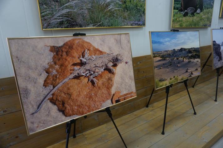 Красоты Природы ландшафтов степной зоны – основной сюжет фотовыставки «Картины Природы Степной Евразии»