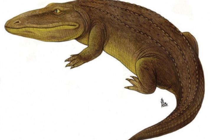 Wetlugasaurus. Photo is taken from open sources