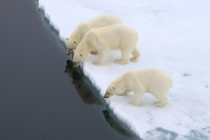 """Photo is provided by the Expeditionary Center """"Arctic"""""""