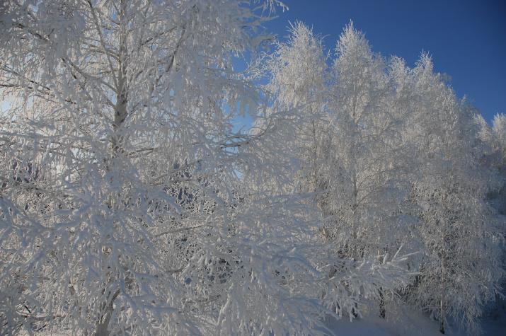 Национальный парк «Бузулукский бор». Фото: А. Чибилёв