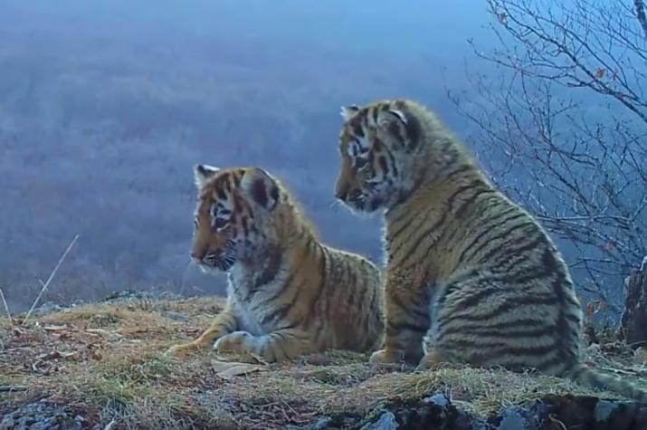 "Фото с сайта национального парка ""Земля леопарда"" leopard-land.ru"